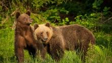 Medve les Székelyföldön